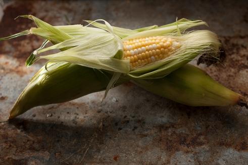 corn-163