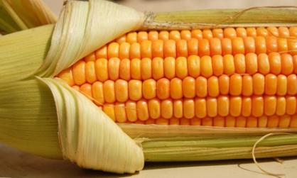 HQ Corn