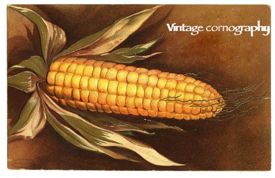 thanksgivingcorn-graphicsfairy009 copy