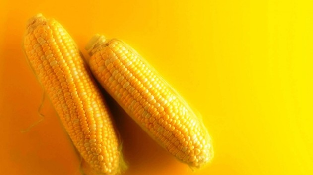 corn_food_vegetables_yellow_background_1600x900_86477